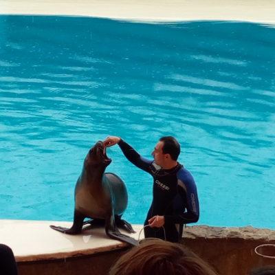 Представление в театре морских животных «Акватория»