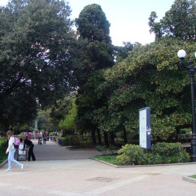 Хвойные парки