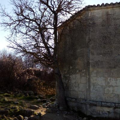 Фисташка туполистная - дерево, исполняющее желания