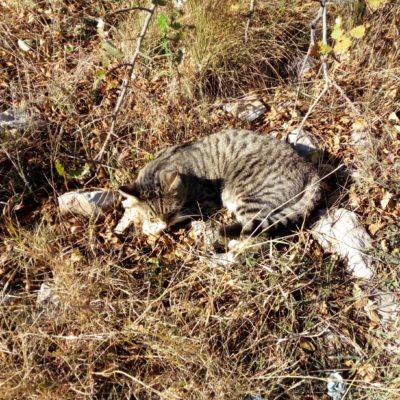 Кошка на Кошке
