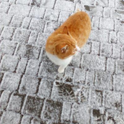 Котик на ай-Петри