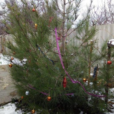 Наша елочка в саду